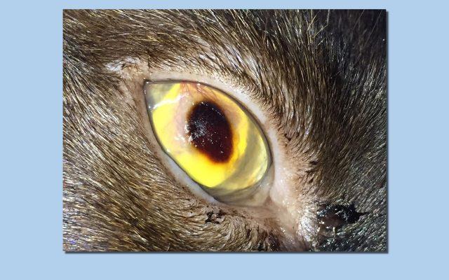 Tamara Estepona - Oftalmología veterinaria - Día de la cirugía