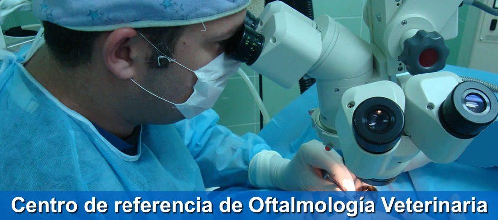 Cirugía oftalmológica en Clínica Veterinaria Tamara Estepona