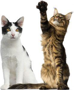 Imagen de dos gatos