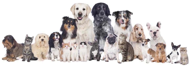 Grupo de perros y gatos