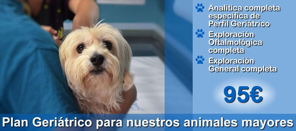 Perro anciano en brazos del veterinario en Clínica Veterinaria Tamara Estepona